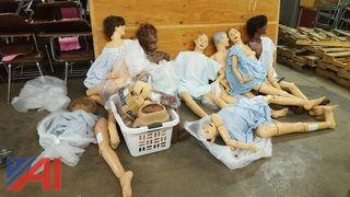 Anatomical Life Size Dummies