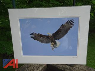 Soaring Bald Eagle Photograph